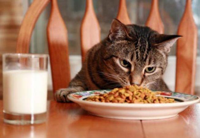 Mancare pisici pentru cistita