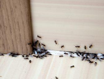Cum pot scapa de insectele din camara?